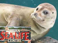 Oban Sea Life Centre
